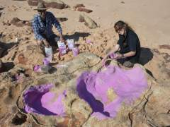 Identificadas 150 huellas de 21 especies de dinosaurios en Australia