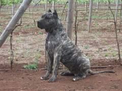 Los dueños de un perro que atacó a una niña se enfrentan a 15.000 euros de sanción