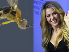 Jack Nicholson da nombre a una de las 23 nuevas especies de arañas acuáticas descubiertas en Australia