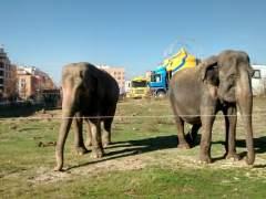 Dos elefantes del circo