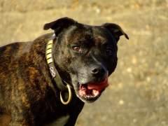 Muere al ser atacado por su perro durante una entrevista para la BBC