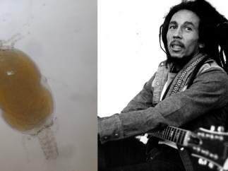 El parásito de Marley
