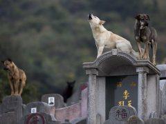 Miles de chinos piden que deje de celebrarse el festival de carne de perro