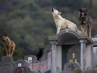 Perros de cementerio