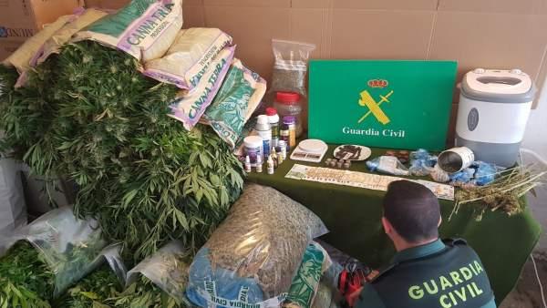 Plantas de marihuana incautadas tras operación antidroga