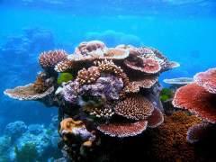 El Gobierno australiano destina 48 millones de dólares a proteger la Gran Barrera de Coral
