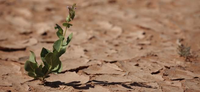 Sequía, Cambio climático