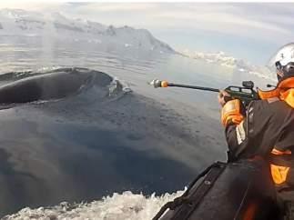 Cámaras en el lomo de las ballenas