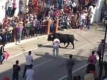 Encierro Del Toro Embolao En Vejer De La Frontera (Cádiz)