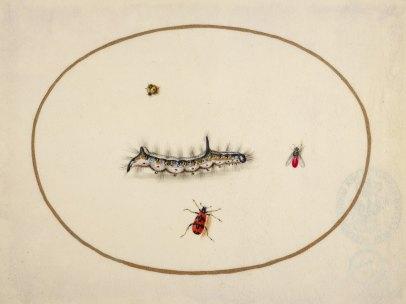 'Raupen und Insekten'