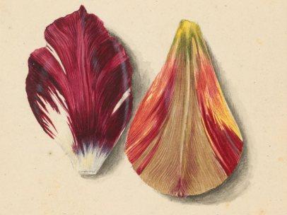 'Einzelne Tulpenblätter'