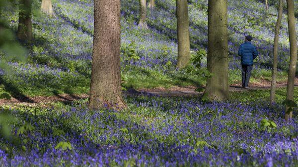 La belleza natural de un bosque belga en primavera