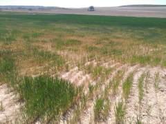 La sequía asola a España: pérdidas millonarias en el campo... y el pasto escasea para el ganado