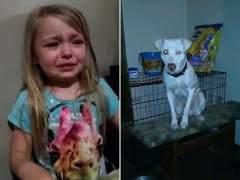 Niña llorando por su perro