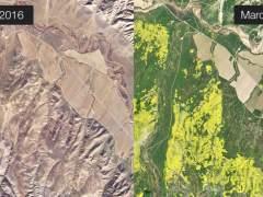 Así se ven desde el espacio los campos de flores en California