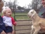 Bebé imitando a un cordero