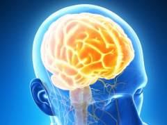 Científicos identifican cómo el cerebro predice el habla