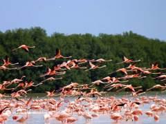 México, un tesoro de biodiversidad y belleza
