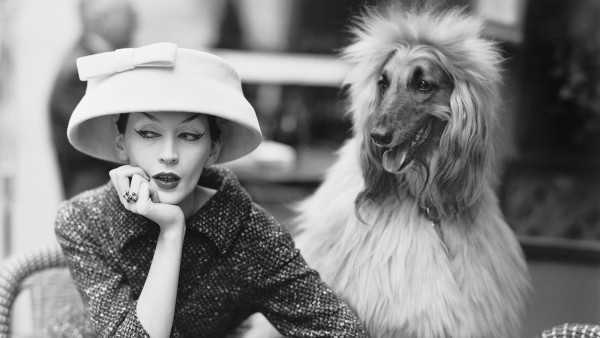 Dovima with Sacha, cloche and suit by Balenciaga, Café des Deux Magots, Paris, 1955. Photograph by Richard Avedon