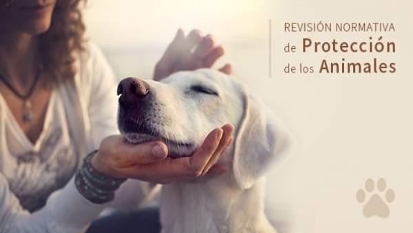 Ley de Protección de Animales