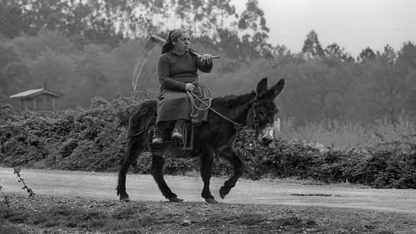 Retrato captado en A Coruña que sirve de portada a 'Hermano asno'