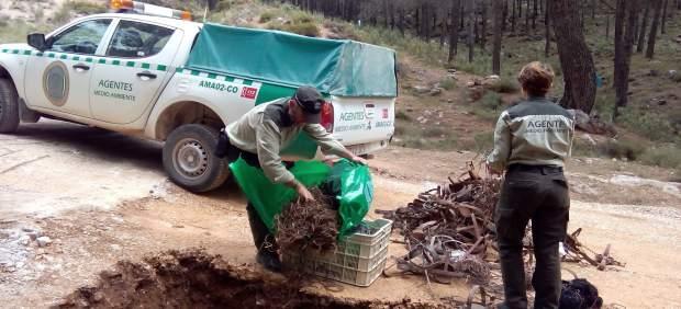 Los agentes de Medio Ambiente proceden a la destrucción de las trampas