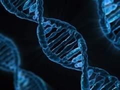 Los 40 nuevos genes que indican inteligencia