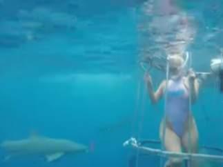 Actriz atacada por un tiburón