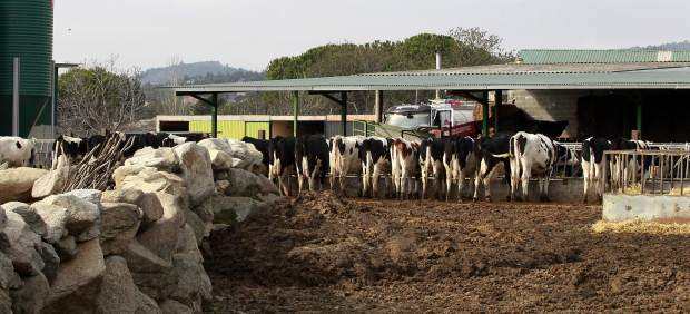 Animal comiendo, animales, vaca, vacas, pastar, pasto, ganaderos