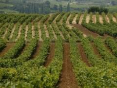Enoturismo: días de vendimia en la Rioja alavesa