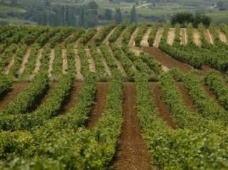 Rioja alavesa