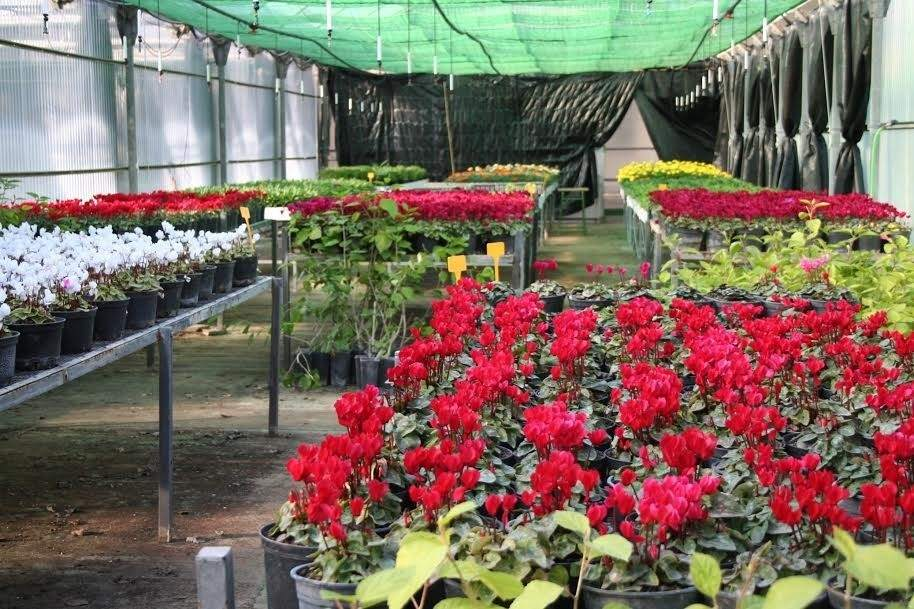 La diputaci n reparte plantas de temporada entre for 20 plantas ornamentales