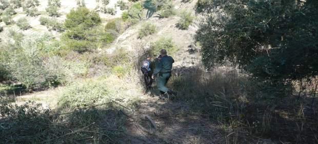 Agentes de la Guardia Civil rastrean cebos envenenados en la Operación Antitox.