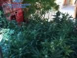 Intervención policial en El Canós