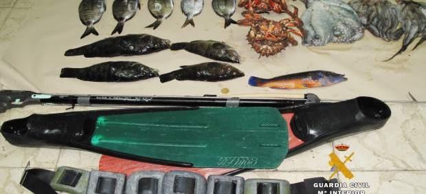 Ejemplares de peces y cefalópodos, así como el equipo, inter