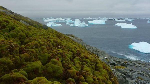 Aumenta la vegetación en la Antártida
