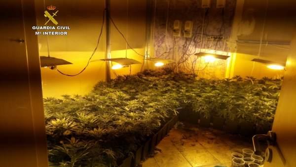 Marihuana intervenida por la Guardia Civil