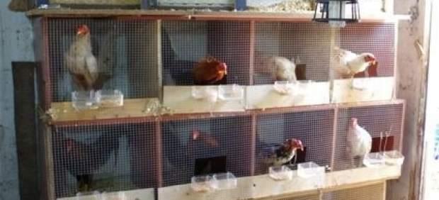 La instalación se ha descubierto en La Punta