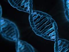 Terapia génica y células madre para reconstruir fracturas graves