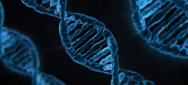 Científicos descubren una terapia génica que evita la aparición de la Ataxia de Friedreich