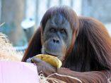Plátanos como regalo de cumpleaños