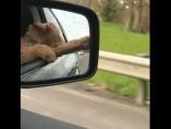Baxter disfrutando del viento