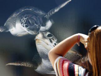Observando tortugas