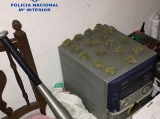 Nota De Prensa Y Fotografía: La Policía Nacional Desmantela Una Plantación De Ma