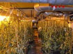 Ocho detenidos por cultivar 1.100 marihuana en una casa de Amer (Girona)
