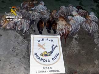 Guardia Civil se incauta de 25 kilos de pulpo en aguas de Cartagena