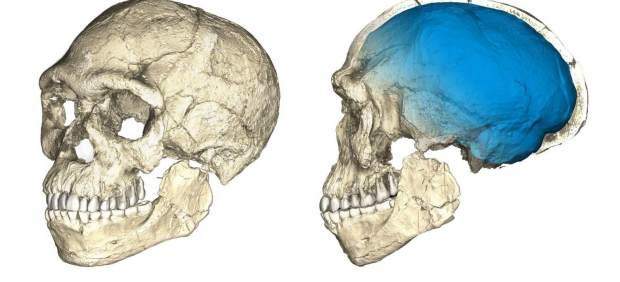 'Homo sapiens'