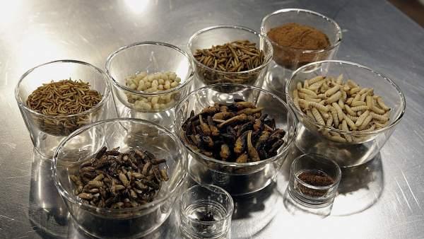Insectos como ingredientes de cocina