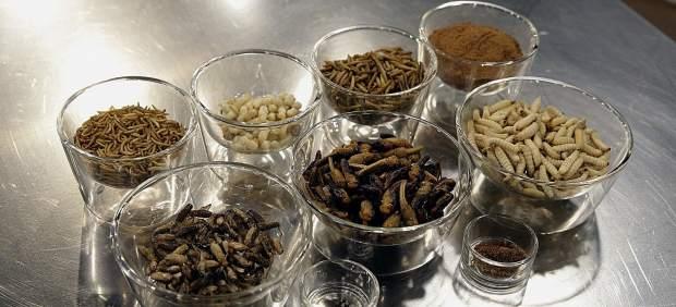 Hamburguesa de avispas y patatas con termitas en una feria gastronómica hondureña