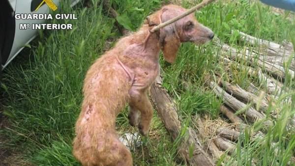 Uno de los perros maltratados